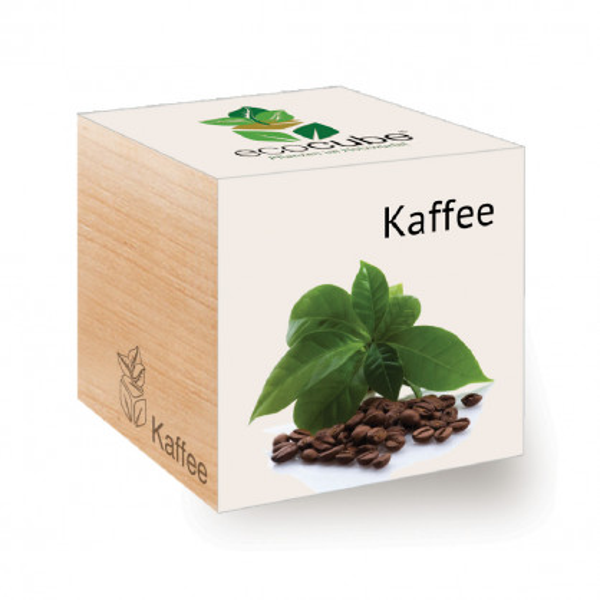 Kaffeepflanze zum selber Züchten - ecocube Holzwürfel von Feel Green.