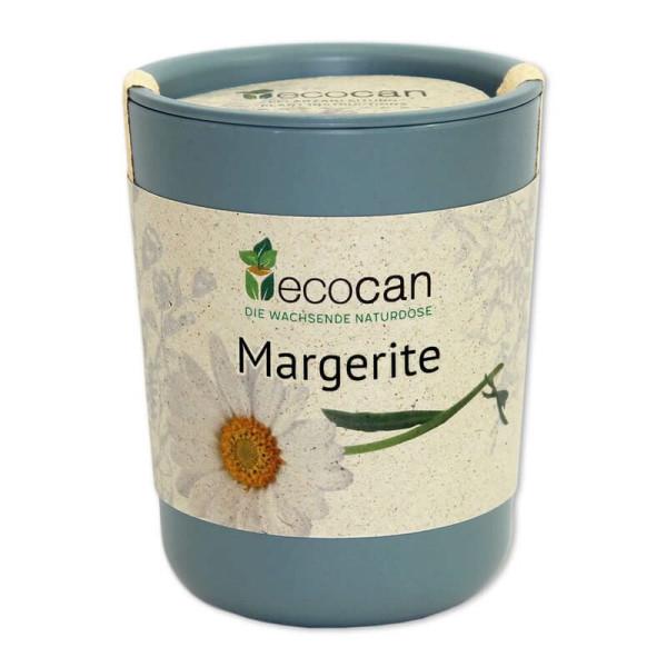 Margeriete aus der Ökodose - ecocan - Feel Green - selber Züchten