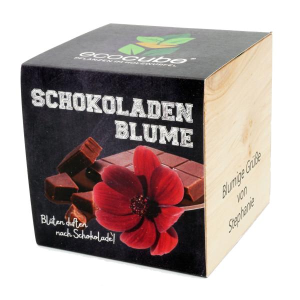 lumengeschenk zum selber Züchen. Schokoblume im Holzwürfel. ecocube Pflanzwürfel mit persönlichem Gravurtext. Blumenwürfel mit Gravur von Feel Green.