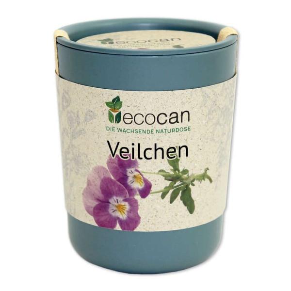 Veilchen aus der Ökodose - ecocan - Feel Green - selber Züchten