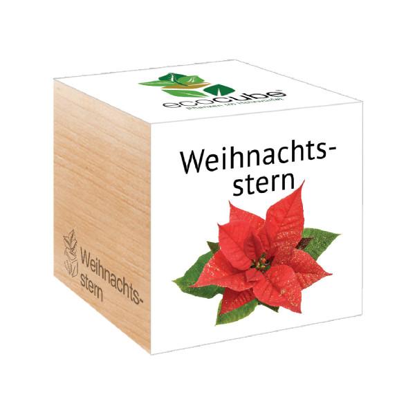 Weihnachtsstern ecocube - Pflanzenwürfel von Feel Green