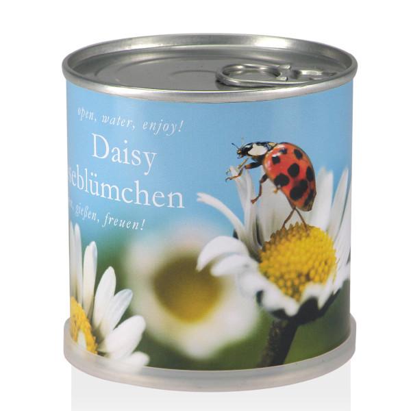 Blumendose - Gänseblümchen Daisy