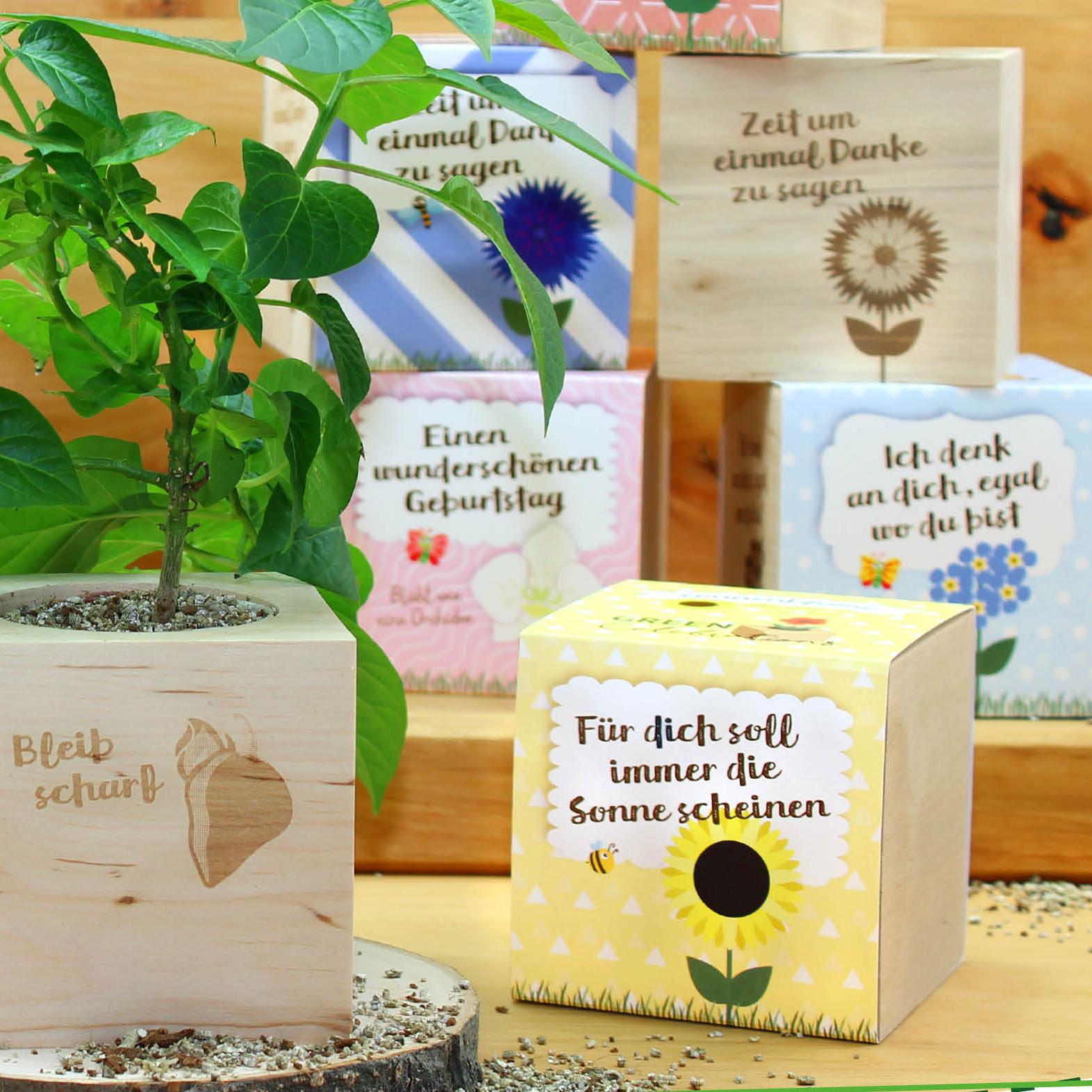 Feel Green Ecocube Celebrations Pflanze Im Holzwurfel