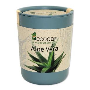 Aloe Vera aus der ecocan Ökodose zum Selber Züchten.