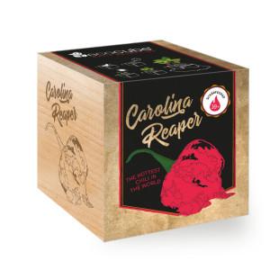 Pflanzwürfel Carolina Reaper von Feel Green. Ecocube Holzwürfel mit Chilisamen. Schärfste Chili der Welt zum selber Züchten!
