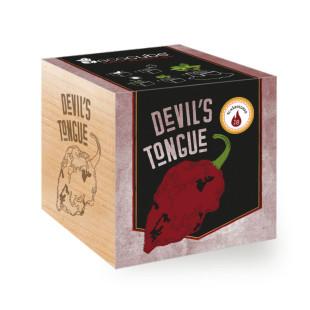 Chili Devils Tongue ecocube, Pflanze im Holzwürfel