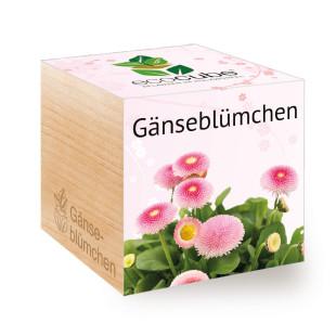 Gänseblümchen Pflanzwürfel ecocube von Feel Green. Gänseblümchen im Holzwürfel. Blume im Pflanzwürfel aus Holz.