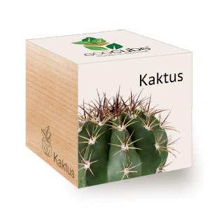 Kaktus zum selber Züchten - ecocube Holzwürfel - Feel Green - Kakteen