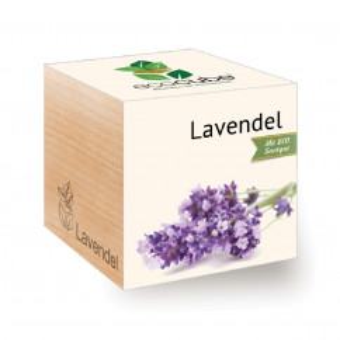 Lavendel ecocube Holzwürfel von Feel Green