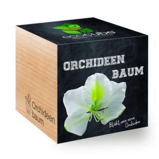 Orchideenbaum zum selber Züchten im Holzwürfel - Feel Green