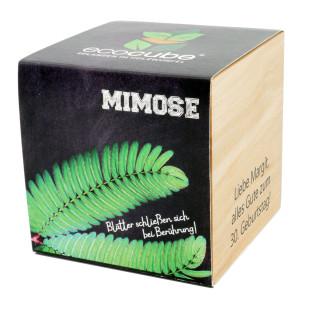 Pflanzwürfel Mimose mit persönlicher Gravur