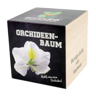 Pflanzwürfel Orchideenbaum mit persönlicher Gravur