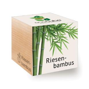 Bambus zum selber Züchten im ecocube Holzwürfel von Feel Green.