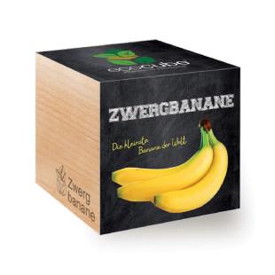 Zwergbanane - Banane - Pflanze - Holzwürfel - ecocube - Feel Green