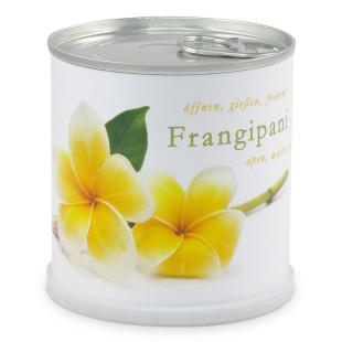 Blumendose Frangipani von Mac Flowers (Extragoods)