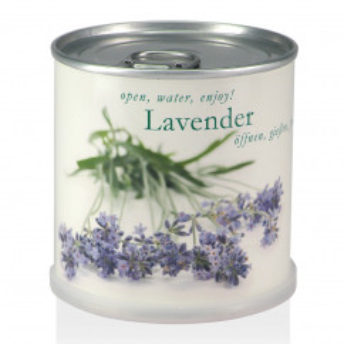 Lavendel aus der Dose