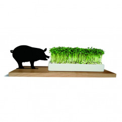 Kresseschale smart n green Schwein